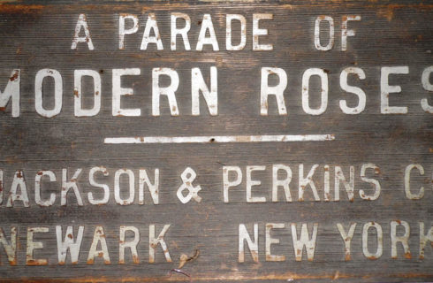 Antique wooden sign with white text: A Parade of Modern Roses - Jackson & Perkins CO Newark, New York.