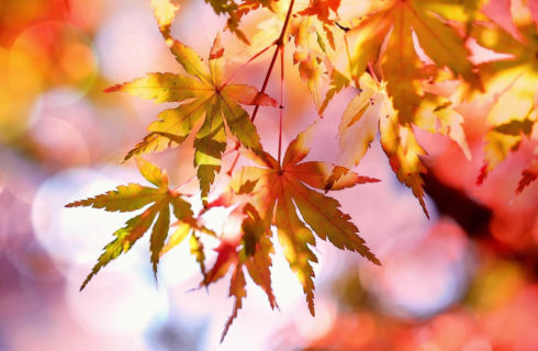 Beautiful yellow and orange fall leaves hang from the trees.